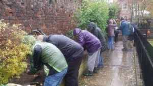 It was raining, but undaunted, our intrepid corm planting volunteers get the job done.